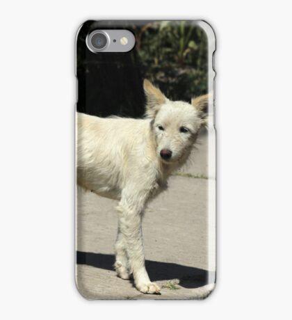 White Dog on Sidewalk iPhone Case/Skin