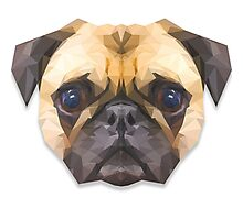 Sir Pugsley of Poly Manor Photographic Print