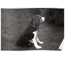 Mabel No 3 Poster