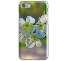 Cheery Blossoms iPhone Case/Skin