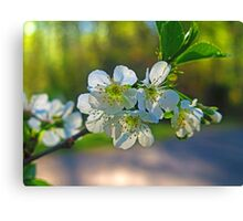 Cheery Blossoms Canvas Print