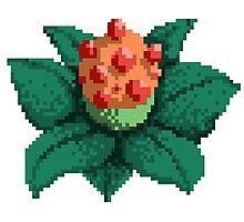 Pixel Plant  Photographic Print