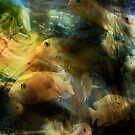 Fishes by zzsuzsa