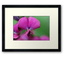 Flower, Walled Garden Framed Print