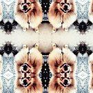 Pomeranian by Melissa de Klerk