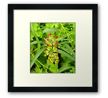 Three Tiered Cancerweed Framed Print