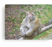 Thoughtful Monkey Canvas Print