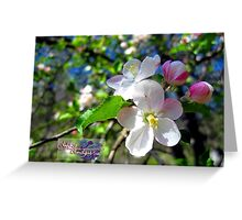 apple blossum treasure 2 Greeting Card