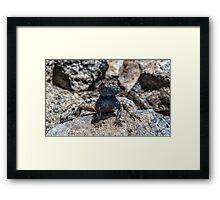 Lizard in Blue Framed Print