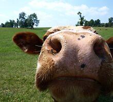 Cow Closeup by JLStewart