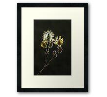 Male Goat Willow Framed Print
