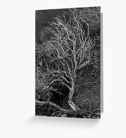 Tree Sculpture Greeting Card