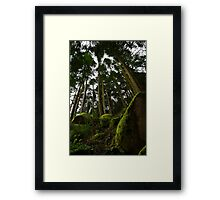 Landscape mossy rock and soaring pine trees Framed Print