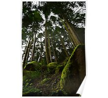 Landscape mossy rock and soaring pine trees Poster