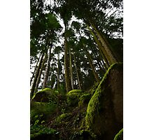 Landscape mossy rock and soaring pine trees Photographic Print