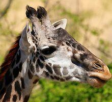 Giraffe - Cincinnati Zoo by virtualdiablo