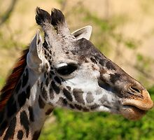Giraffe - Cincinnati Zoo by Tony Wilder