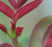 Flower in Macro Sticker