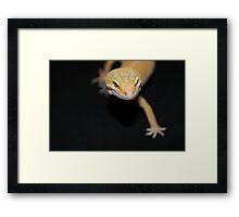 Orange Leopard Gecko Framed Print