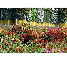Garden with many colorful flowers. Photographic Print