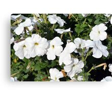 White flowers in the green bush. Canvas Print