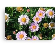 Beautiful light pink flowers natural background. Canvas Print