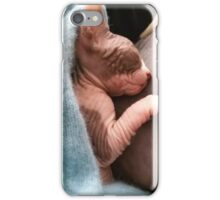 Kitten sphynx cat bicolor sleep iPhone Case/Skin