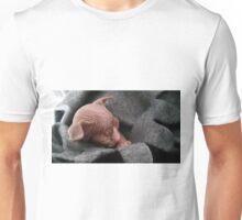 Kitten baby sphynx Unisex T-Shirt