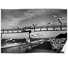 Birds Fly - Koserow Poster