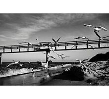 Birds Fly - Koserow Photographic Print