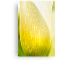 Compassion for the Pig Lily Canvas Print