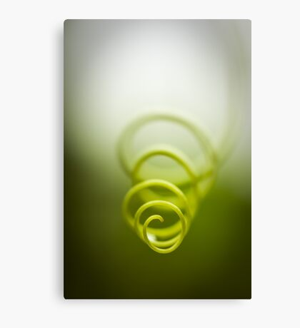 Curly twist of nature Canvas Print