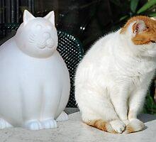 Cats by Arie Koene
