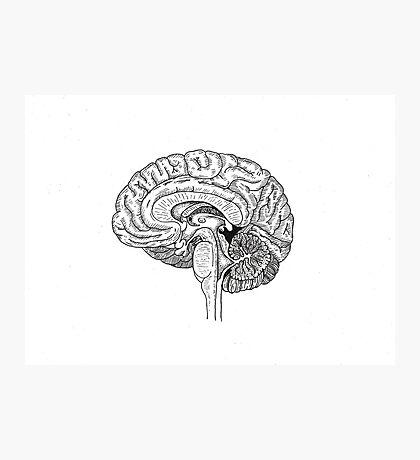 Brain Anatomy Photographic Print