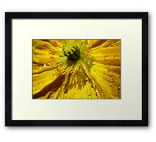 Yellow Poppy Close-up Framed Print