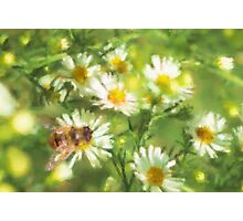 Bumble Bee Daisies Photographic Print