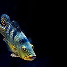 Piranha by zzsuzsa