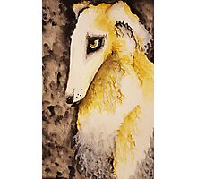 Borzoi Photographic Print