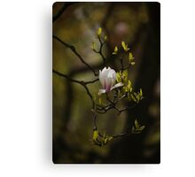 Spring Blossom on tree Canvas Print