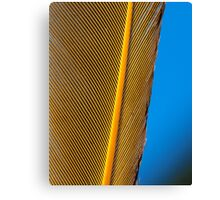 Feathers of a Bird Canvas Print
