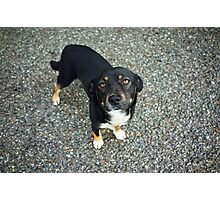 Bonny the Perro (it means dog!) Photographic Print
