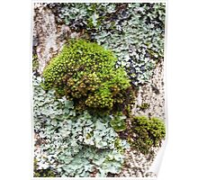 Mossy Loveliness Poster