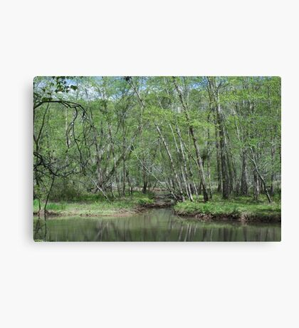 This is my swamp Canvas Print