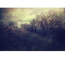 Seasonal Photographic Print