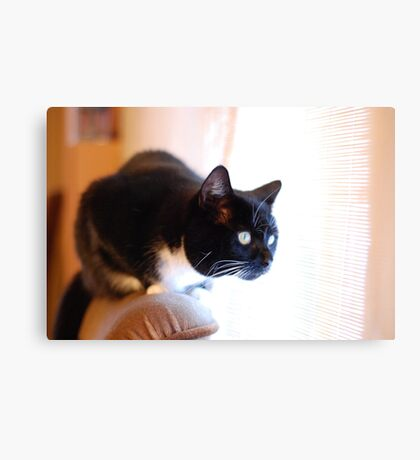 Tussi the Cat vs. Venetian Blinds Canvas Print
