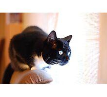 Tussi the Cat vs. Venetian Blinds Photographic Print