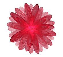 Red Flower Bloom Fractal  Photographic Print