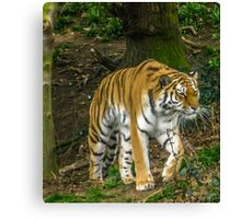 Her Forest. Canvas Print
