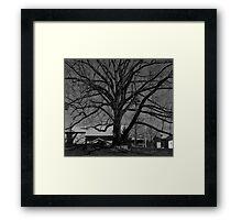 Dull Tree Framed Print