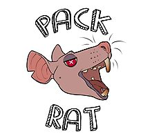 Pack Rats Photographic Print